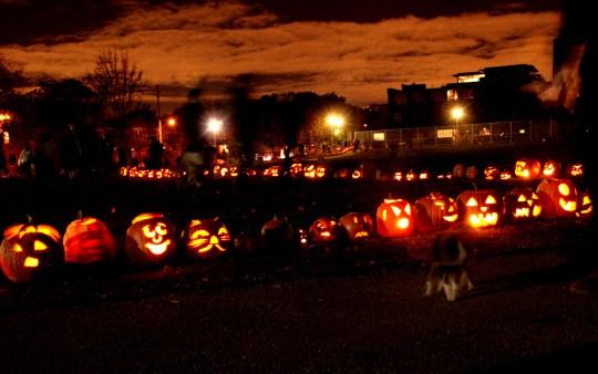 pumpkins-everywhere